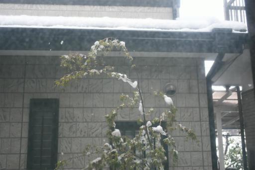 20200329・季節外れの雪18