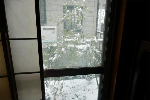 20200329・季節外れの雪17