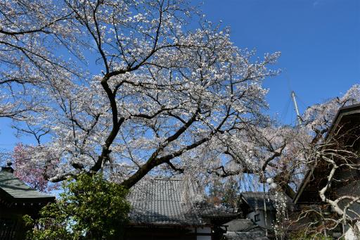 20200324・金仙寺と狭山湖空3