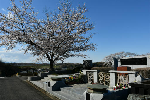 20200324・金仙寺と狭山湖空9・尾崎豊の墓と空