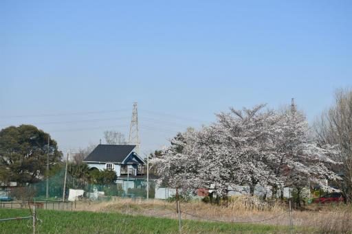 20200326・今日は荒幡富士散歩空5・鉄塔と桜