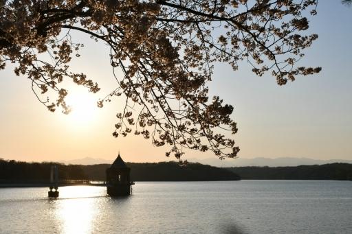 20200325・懲りずに狭山湖散歩とっておき2・桜夕景色に抱かれて