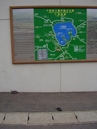 東北温泉旅行記18・(未発表)十和田湖・カメさんも行った