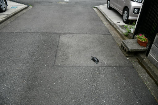 20200621・続仕事休みカメさんの掃除後に散歩01