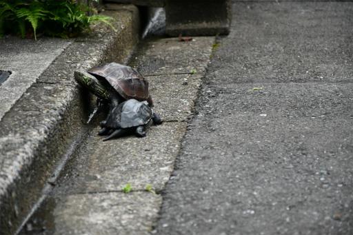 20200621・続仕事休みカメさんの掃除後に散歩10