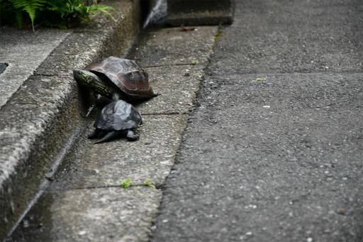 20200621・続仕事休みカメさんの掃除後に散歩09・ニアミス