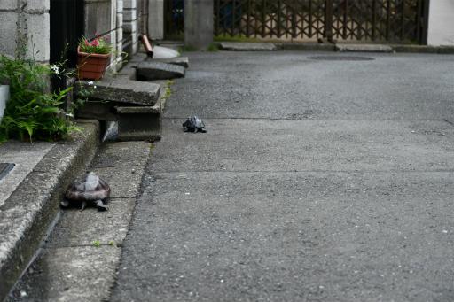 20200621・続仕事休みカメさんの掃除後に散歩17