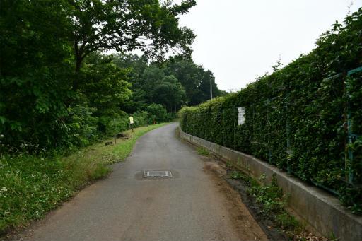 20200627・二度目の仕事休日に狭山湖へ散歩2-07