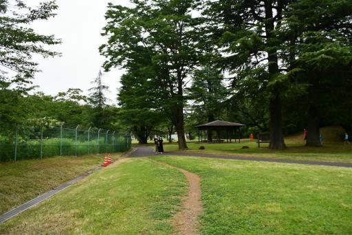 20200627・二度目の仕事休日に狭山湖へ散歩3-05