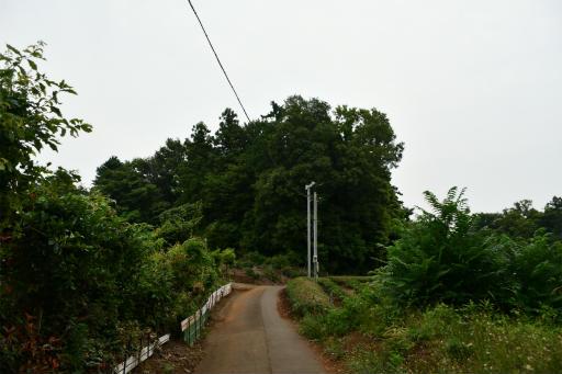 20200627・二度目の仕事休日に狭山湖へ散歩3-16