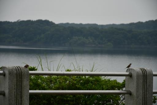 20200627・仕事休日狭山湖へ散歩にゃー4