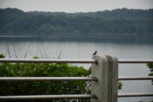 20200627・仕事休日狭山湖へ散歩にゃー3