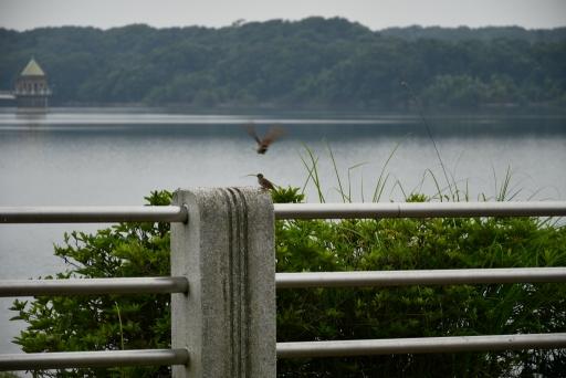 20200627・仕事休日狭山湖へ散歩にゃー2