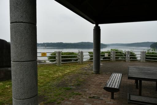 20200627・仕事休日狭山湖へ散歩にゃー1・スズメ