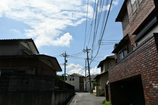 20200801・梅雨明け散歩08