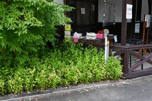 20200809・近所植物秩父&山梨2-01