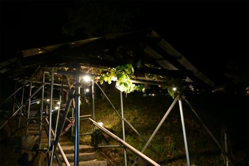 20200809・近所植物秩父&山梨4-05