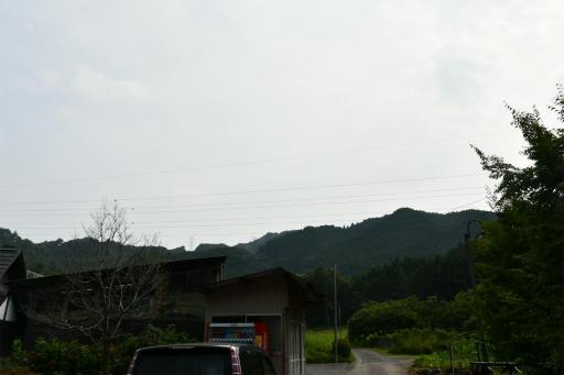 20200809・近所植物秩父&山梨空03・たいら栗園