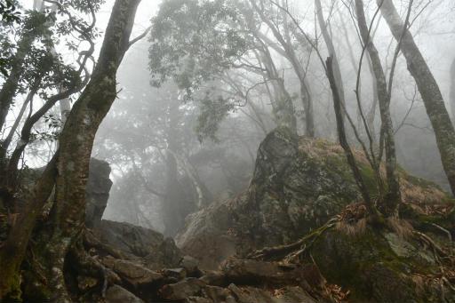 20201127・大岳山へ5-11