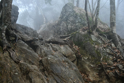 20201127・大岳山へ5-10・11時36分、岩が出てきた