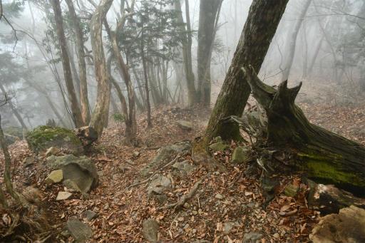 20201127・大岳山へ6-06・鋸尾根を下る