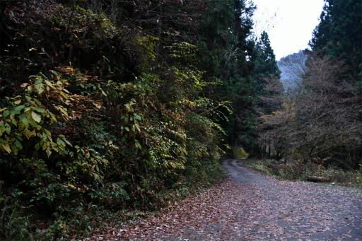 20201127・大岳山へ7-24・20500歩歩いた
