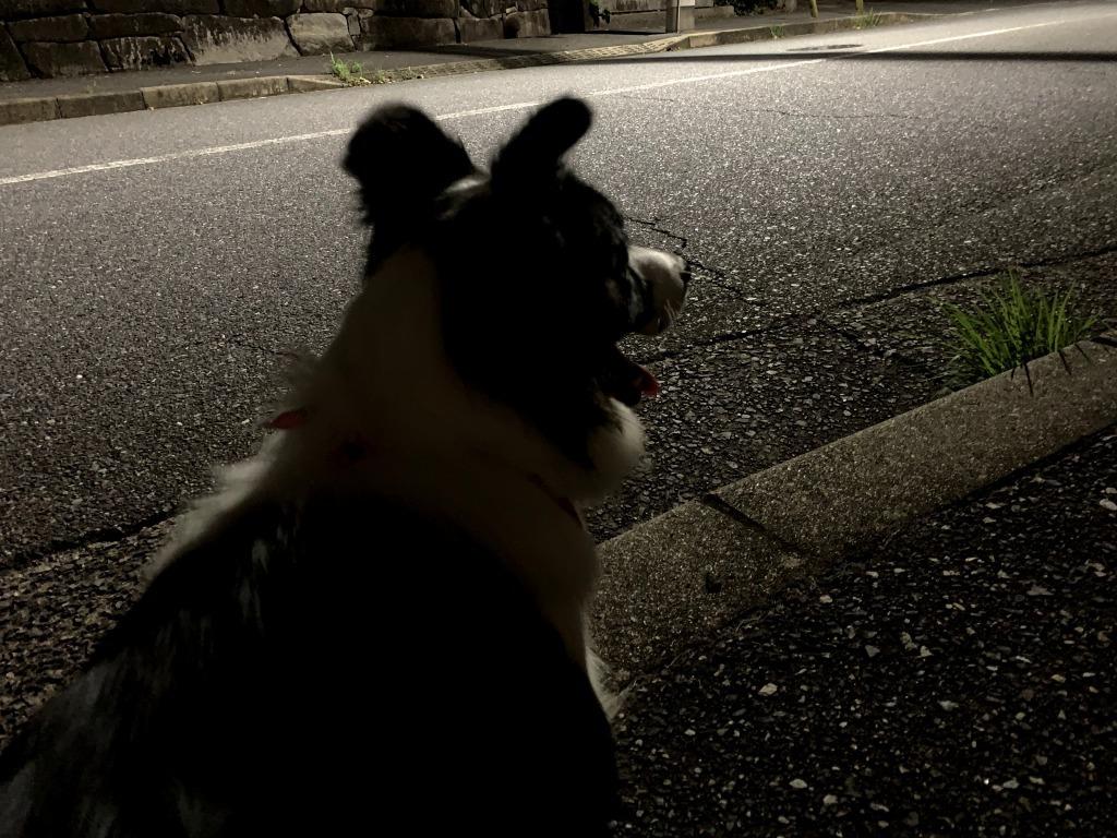 20200812くまちゃん夜交通調査