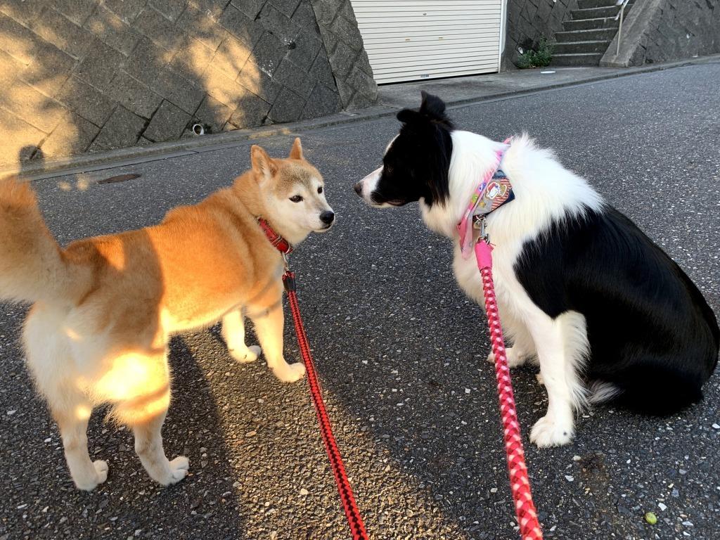20200919くまちゃんこまちゃん同時散歩8