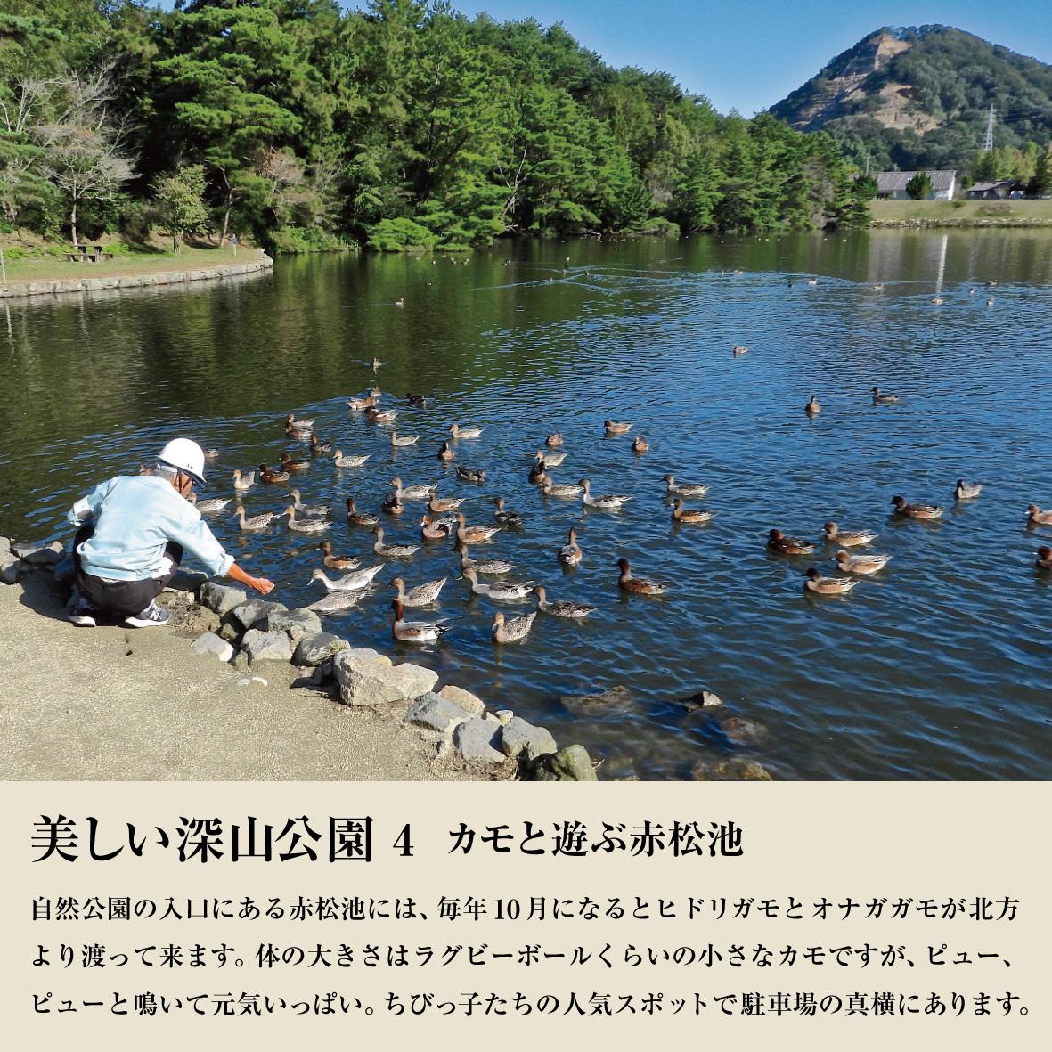 カモと遊ぶ赤松池-01