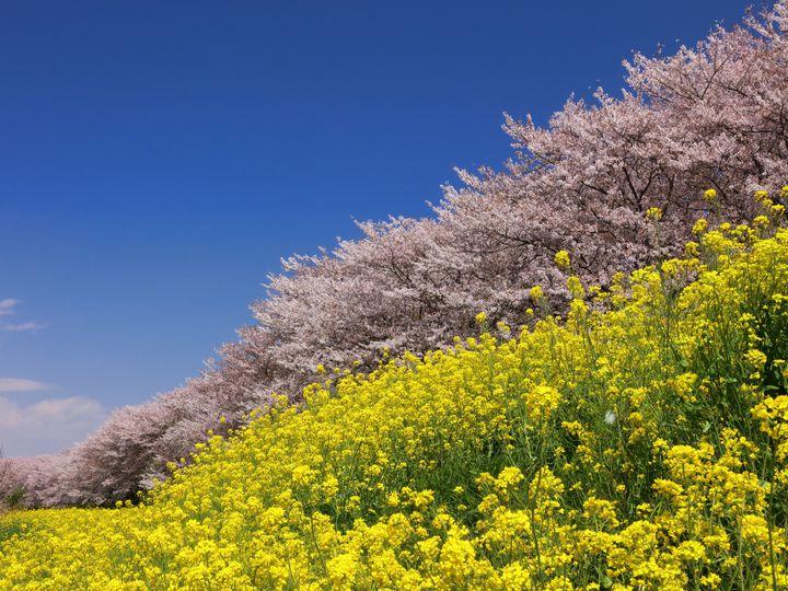 を 春の 風