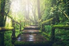 緑のなかの橋