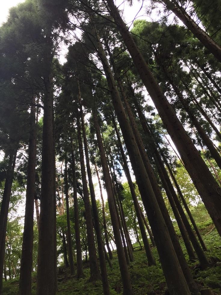 森林セラピー2