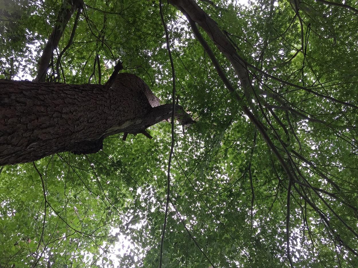 森林セラピー6