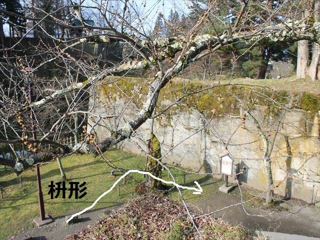 鶴ヶ城③IMG_6929