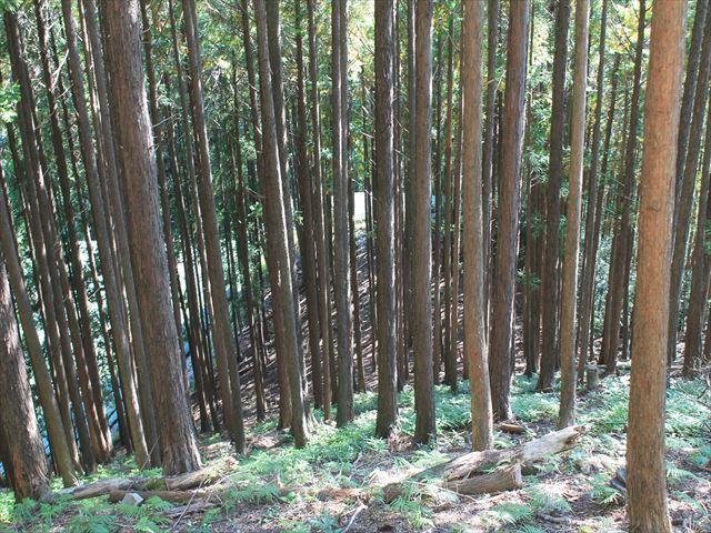 奥池ヶ谷IMG_8772