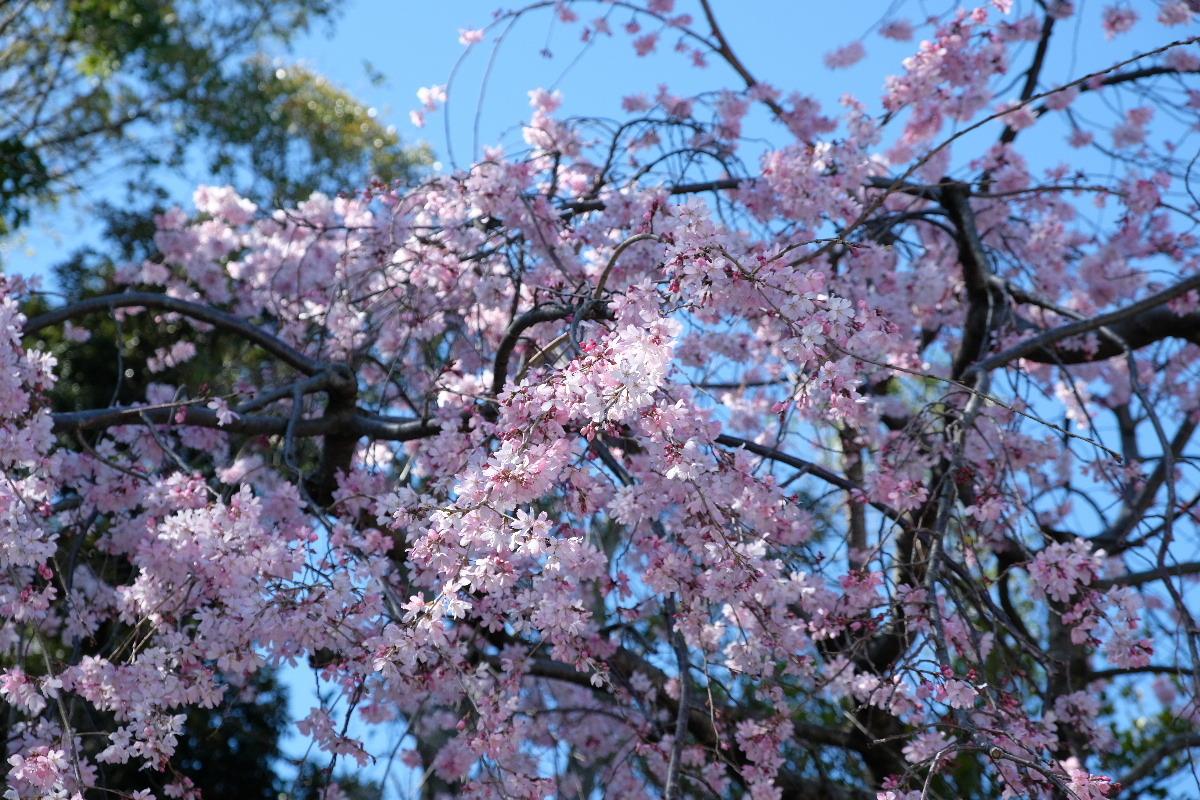 2020_0320yokohamaF0031.jpg