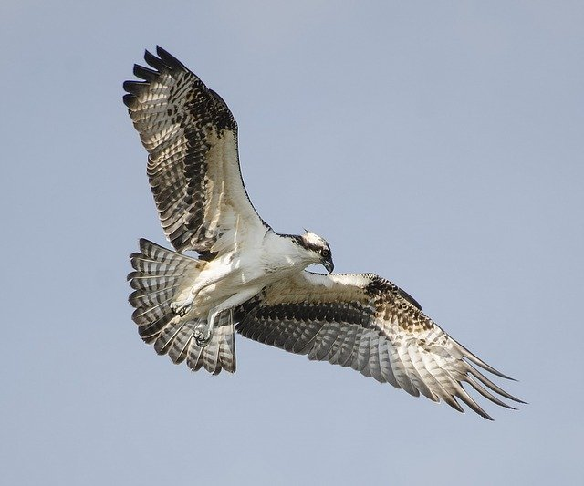 bird-1067888_640.jpg