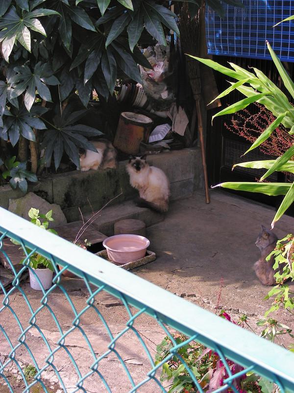 玄関先の猫3匹2