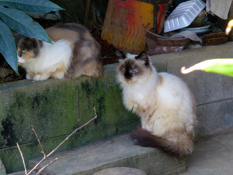 玄関先の猫3匹1