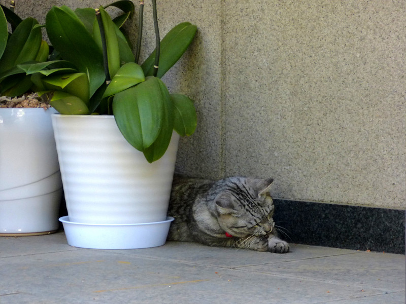 ドングリで遊ぶサバトラ猫1