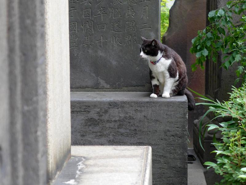 石碑の上の黒白猫1