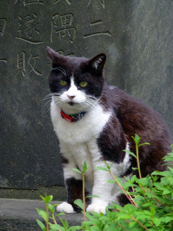 石碑の上の黒白猫2