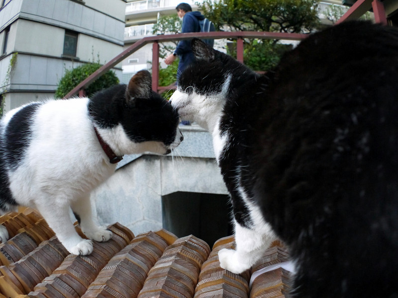 卒塔婆と義姉妹猫2