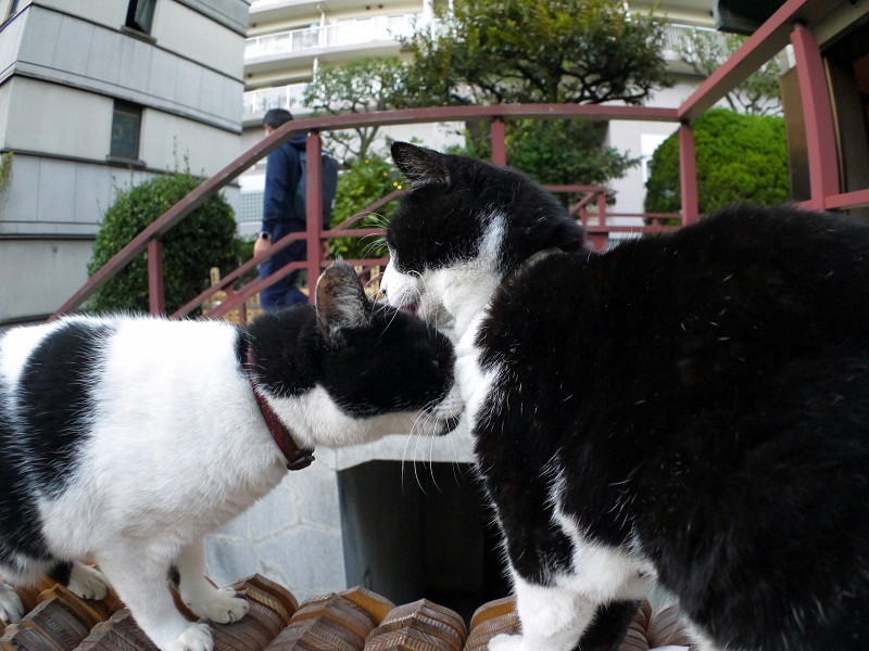 卒塔婆と義姉妹猫3