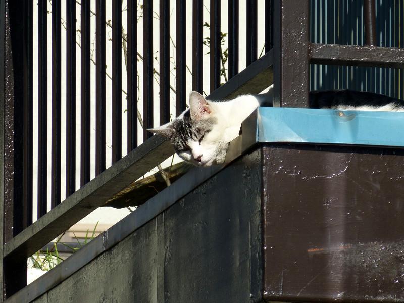 物干し台のグレー白猫2
