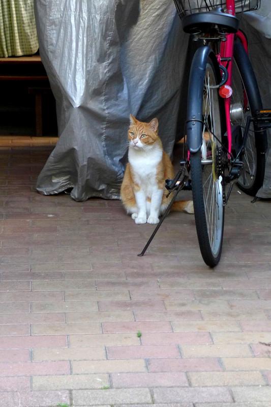 ガレージの茶白猫