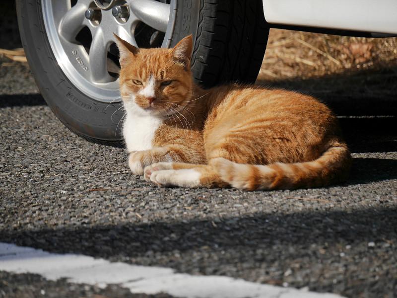 タイヤと茶白猫