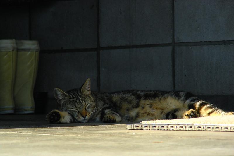 熟睡中のキジ白猫1