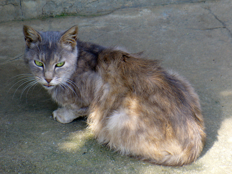 3匹目の猫2