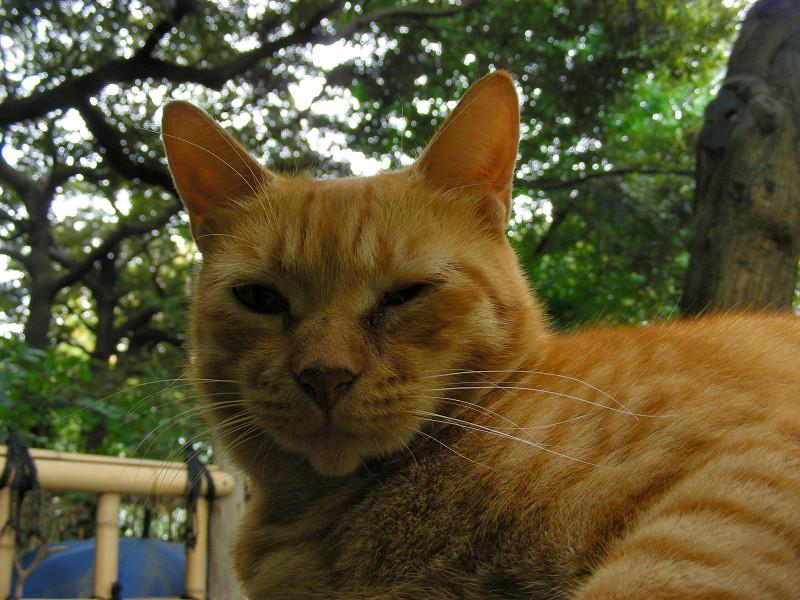 岩の上の茶トラ猫3